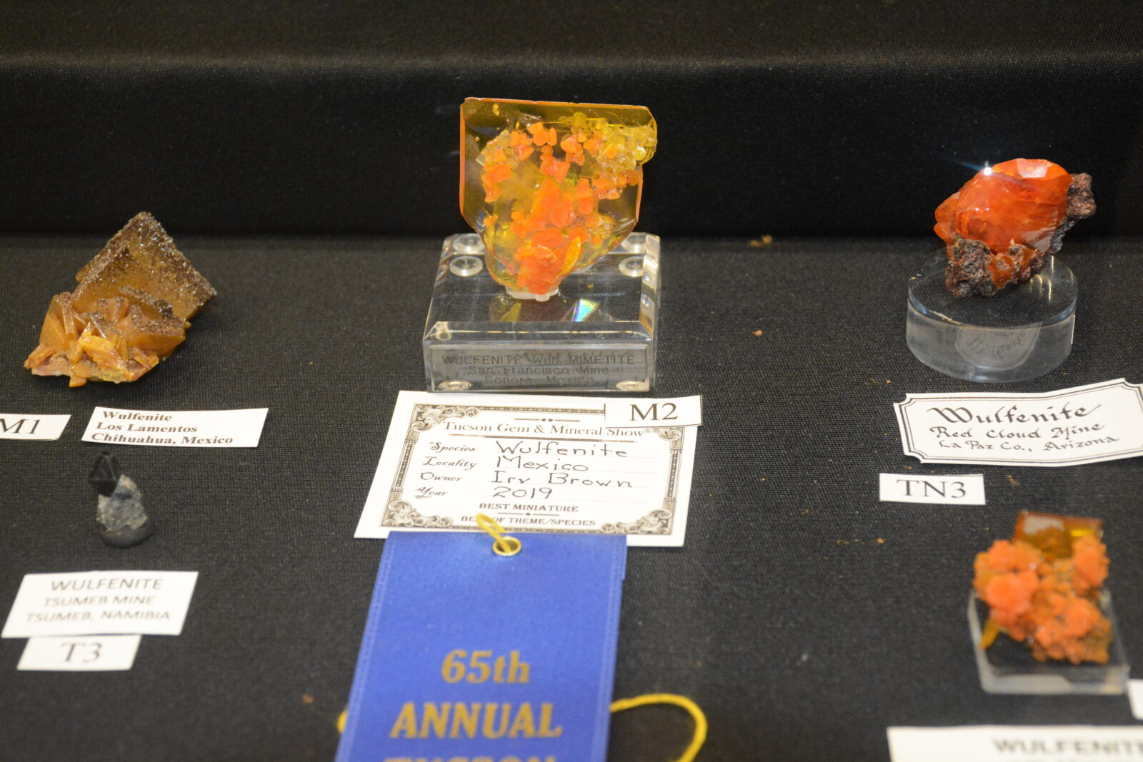 2019 TGMS Best Miniature - Best of Theme - Species winner; Irv Brown