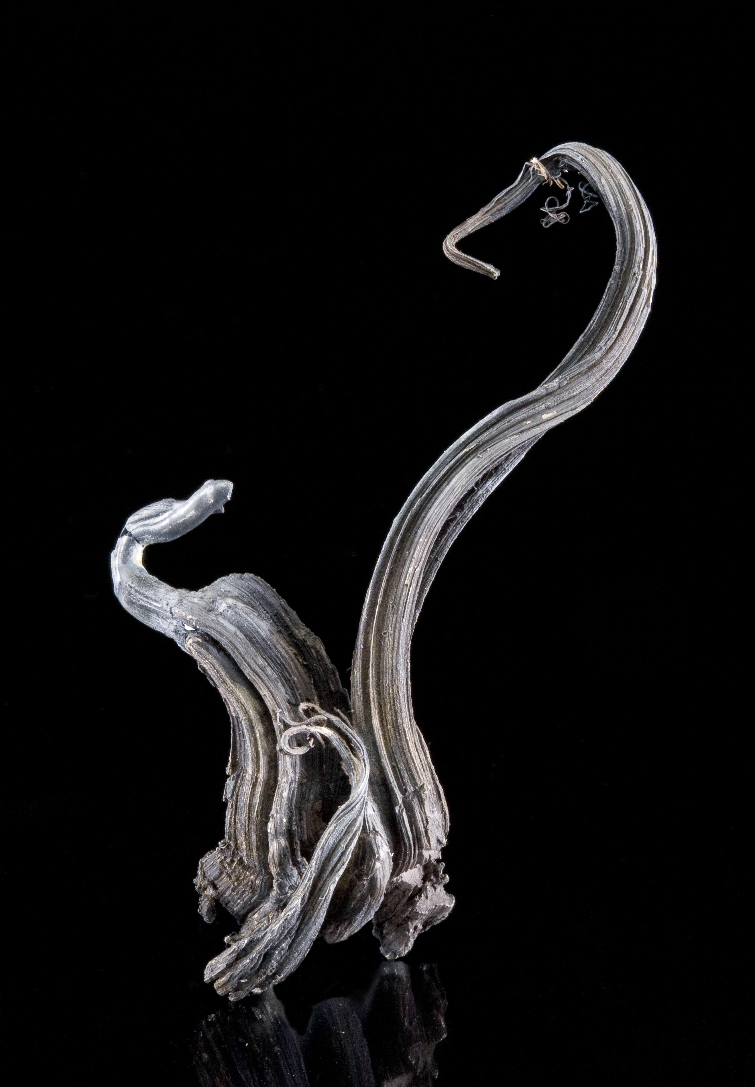 A truly elegant specimen size range favorite Himmelsfurst silver I