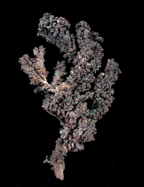 Truly exceptional limb dendritic crystallized Copper quite rare native
