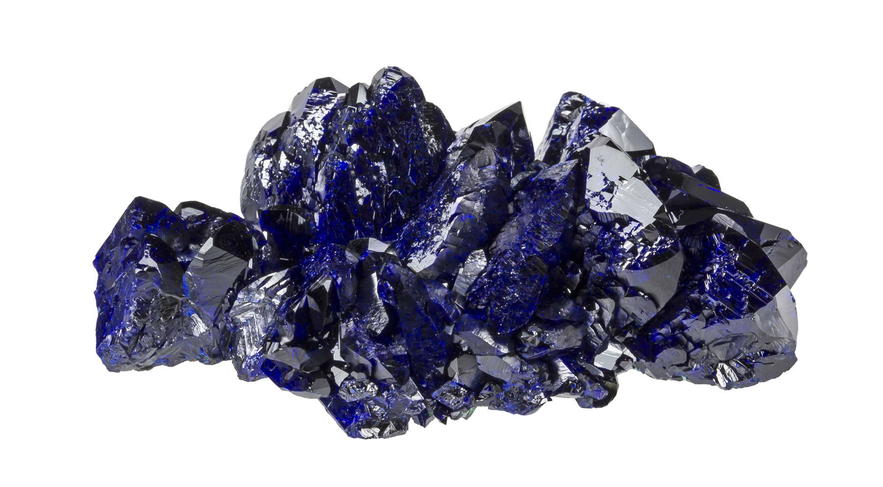 The bright electric blue really makes specimen shine gives real wow