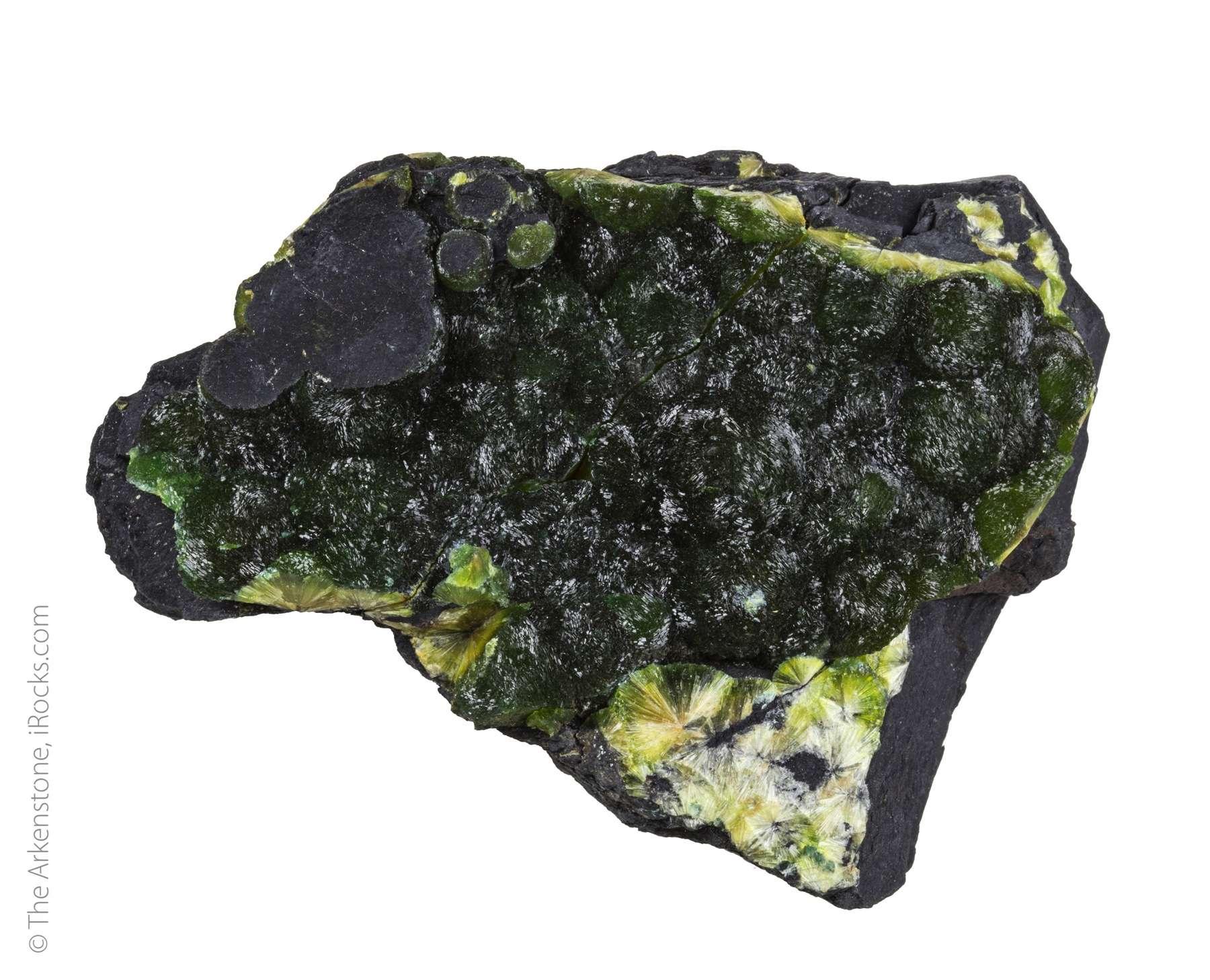 Almost covering black shale matrix glistening hemispheres 1 5 cm